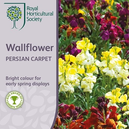 Erysimum cheiri Persian Carpet (mixed)