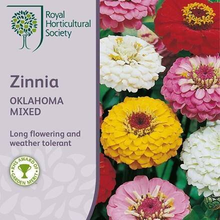 Zinnia Oklahoma Mixed (Oklahoma Series)