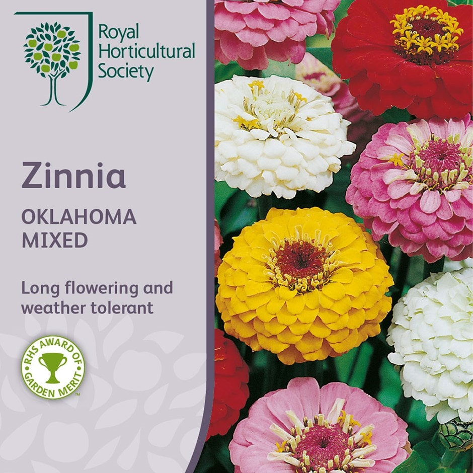 zinnia 'Oklahoma Mixed'