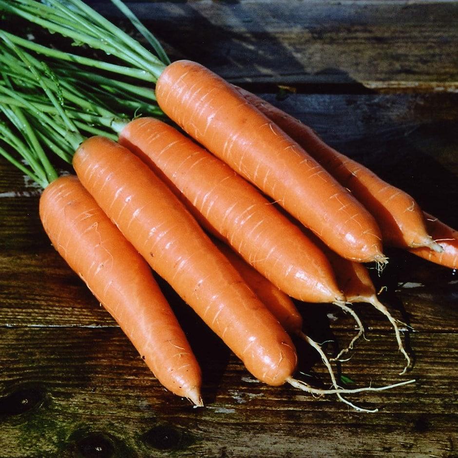 carrot / Daucus carota 'Eskimo' F1
