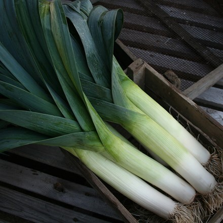 leek Below Zero