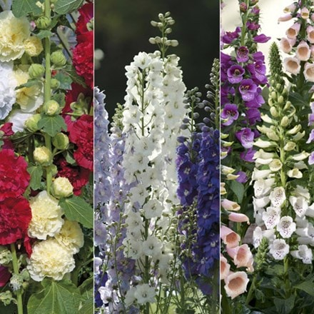 Cottage garden perennial collection of 60 plants