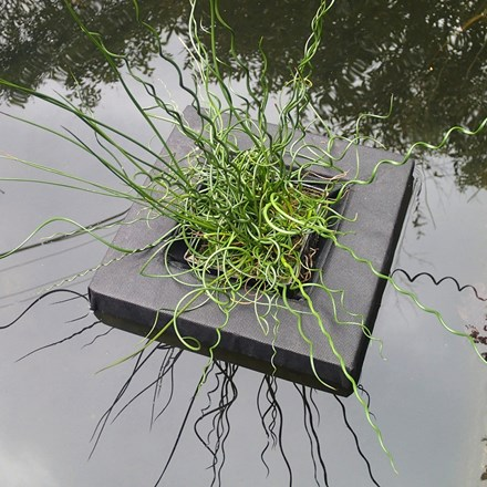 Floating island for shallow water plants