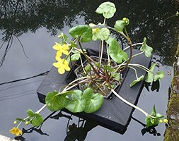 Floating island for 3 litre  shallow water plants