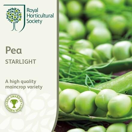 pea Starlight