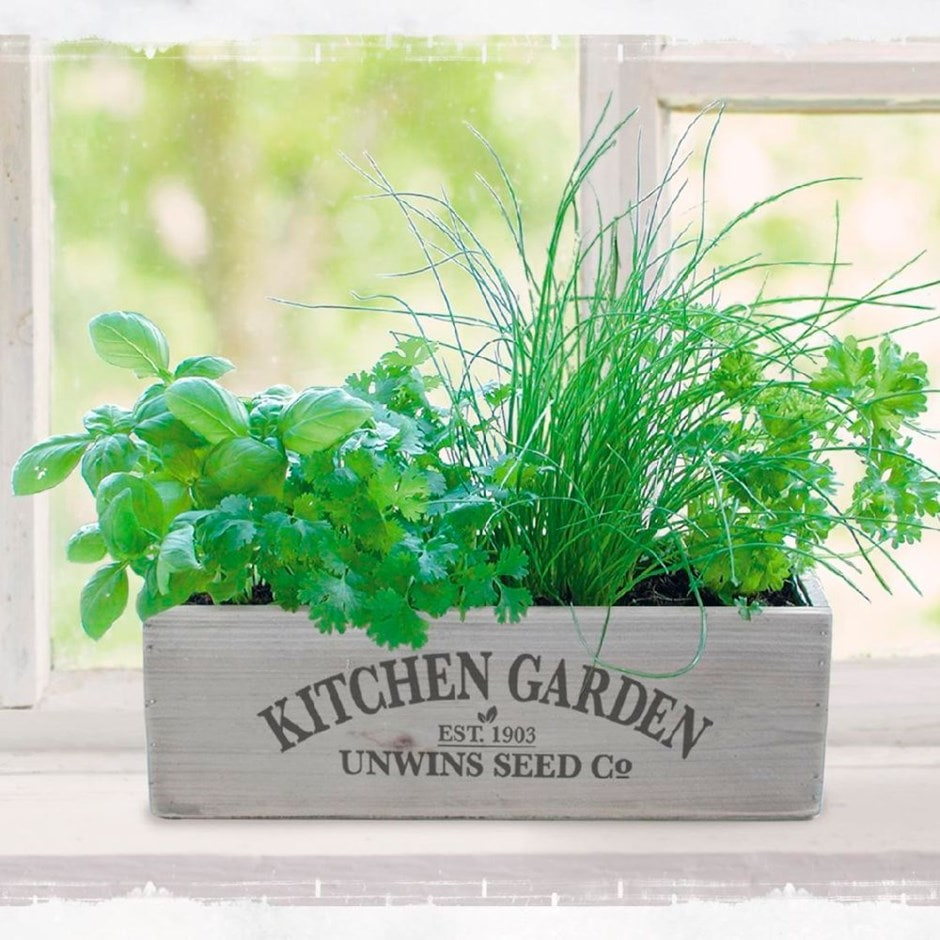 Kitchen Garden Kit: Buy Herb Kitchen Garden Kit Herb Kitchen Garden Kit: £9.99