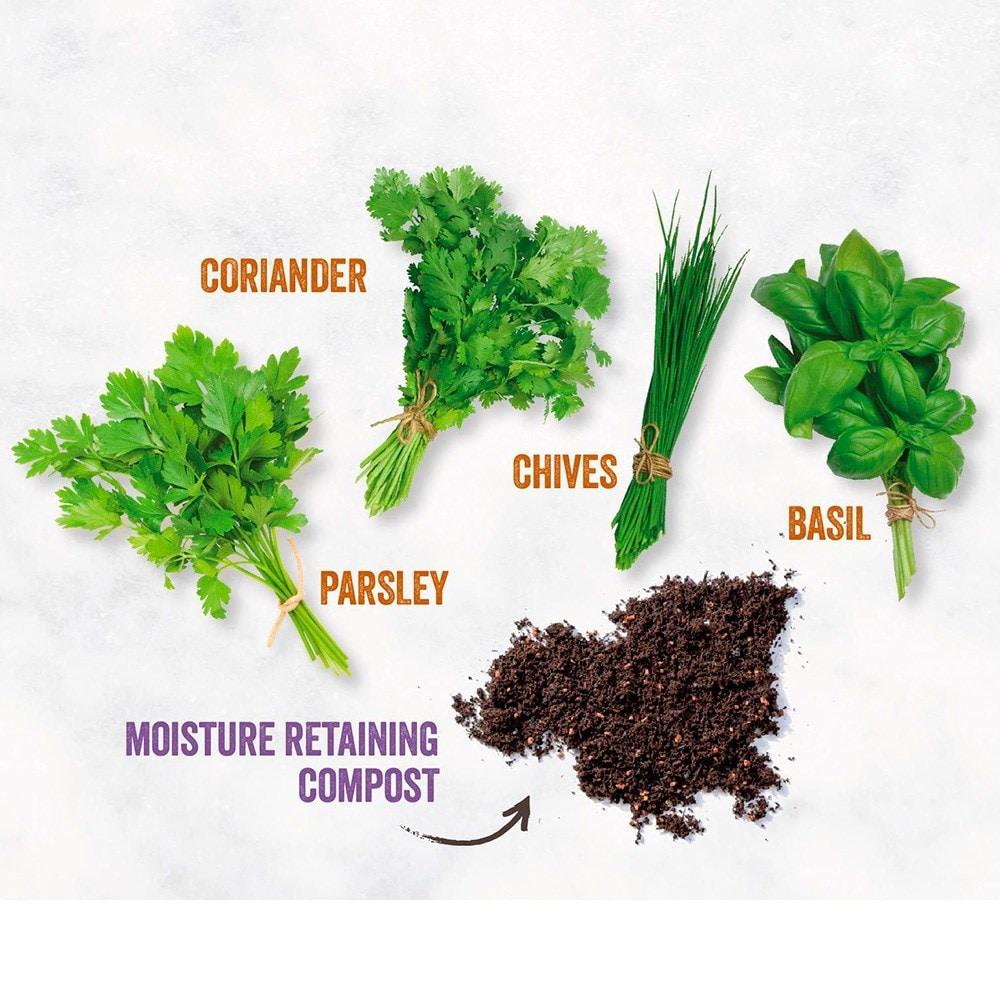 Buy Kitchen Herb Garden Kit Kitchen Herb Garden Kit Delivery By