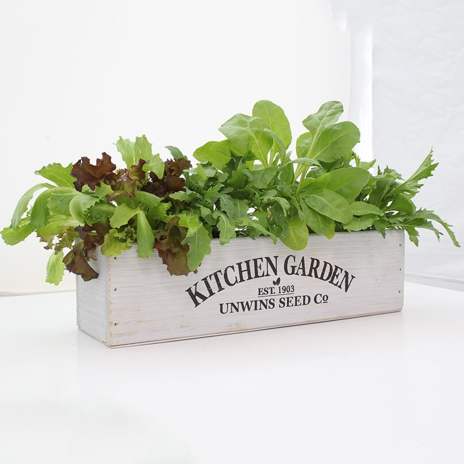 Kitchen salad garden kit