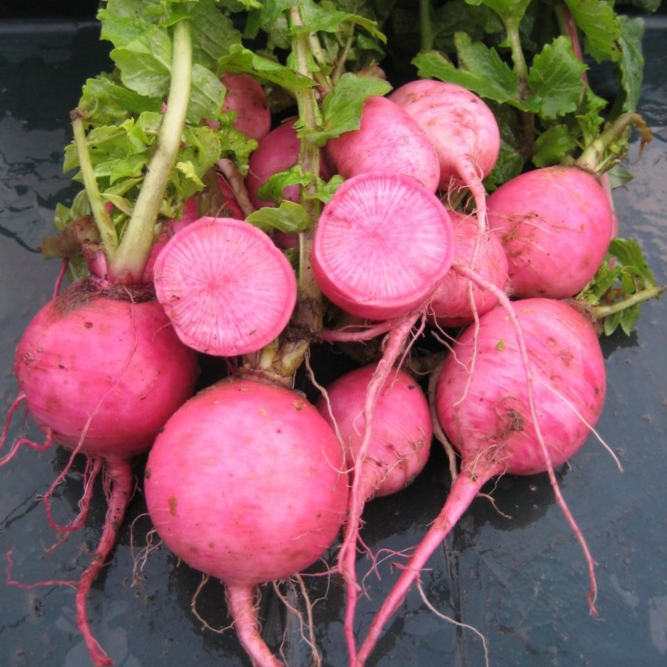radish / Raphanus sativus 'Redmoon'