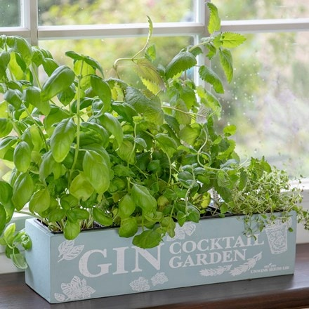 Gin cocktail herb garden kit