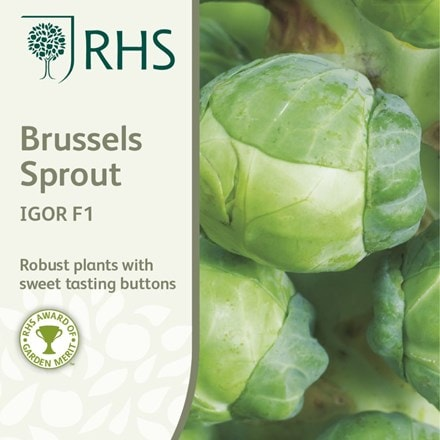 brussels sprout Igor F1