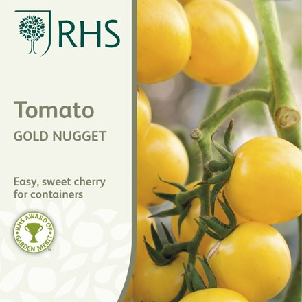 tomato (cherry) Gold Nugget