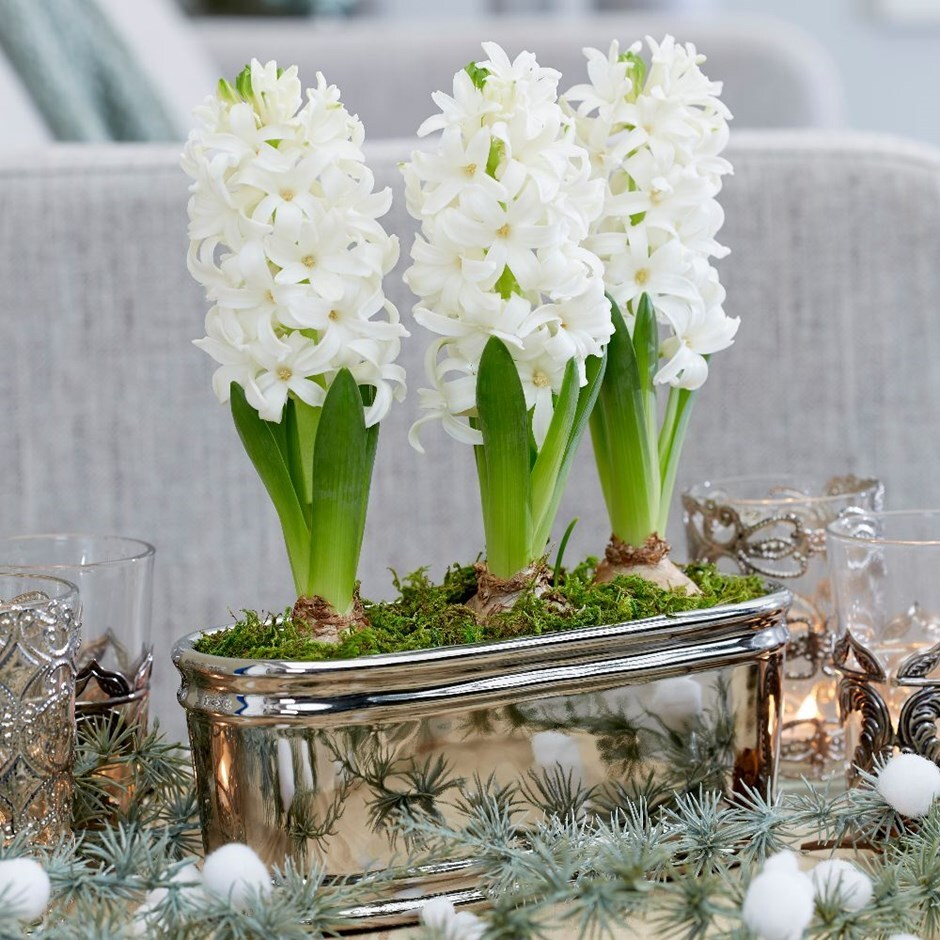 Scented white hyacinths in ceramic bowl
