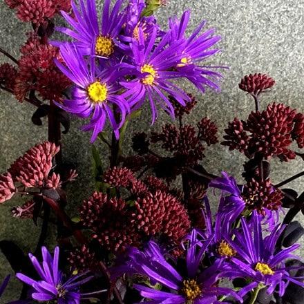 Sedum and Aster plant combination