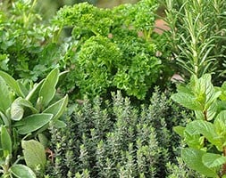 Herb collection (6 Mixed Herbs