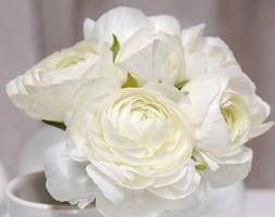 Ranunculus asiaticus Aviv White