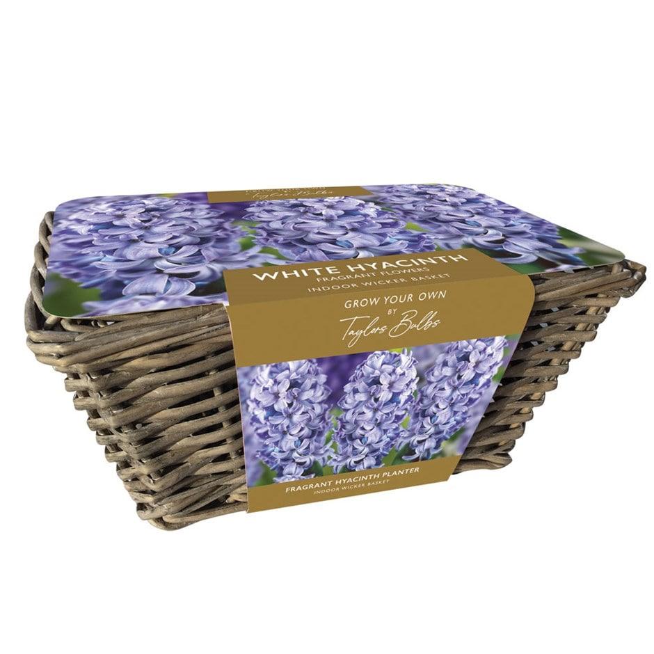 Buy Gift Set Indoor Blue Hyacinths And Wicker Basket Gift