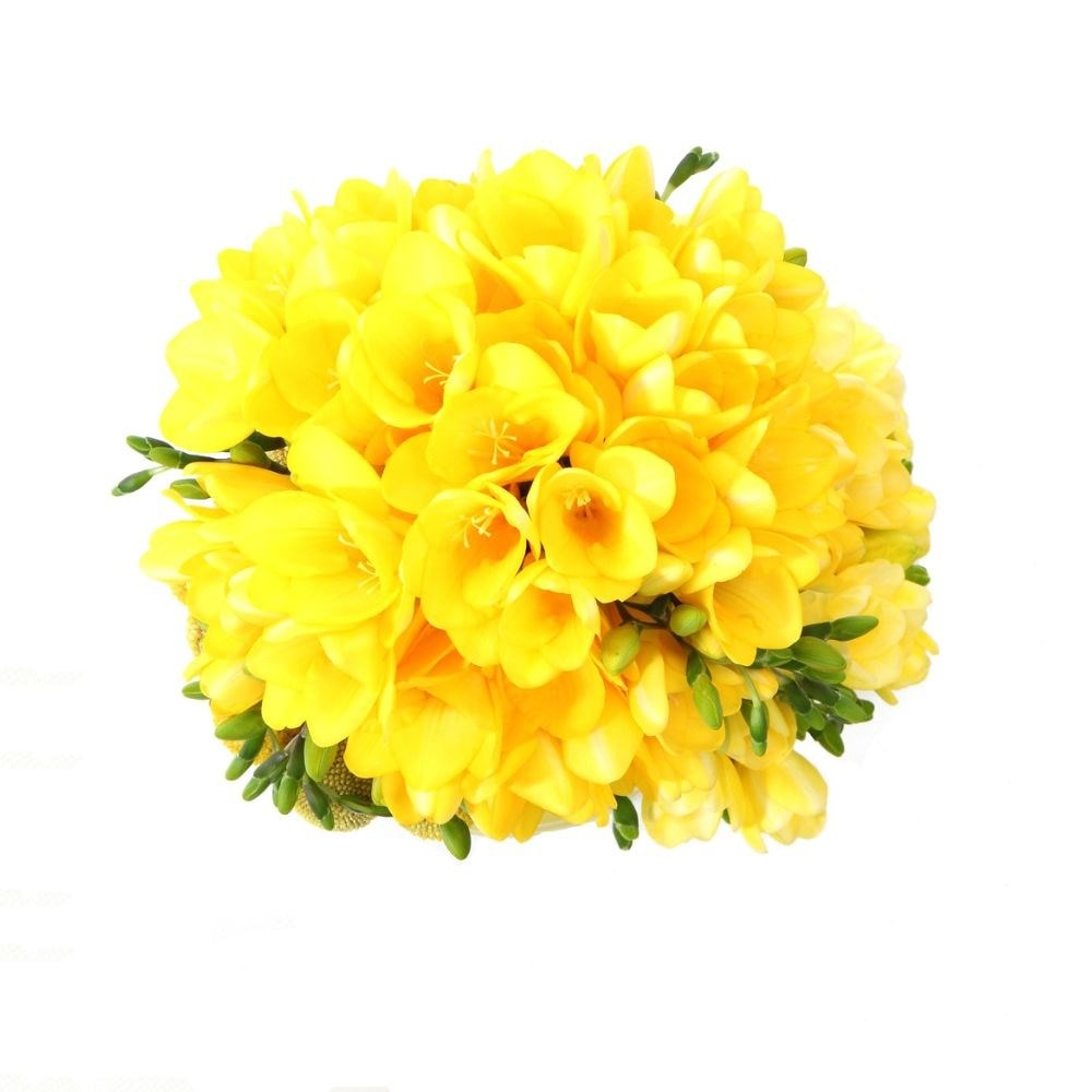 Buy Freesia Bulbs Freesia Golden Yellow 399 Delivery By Crocus