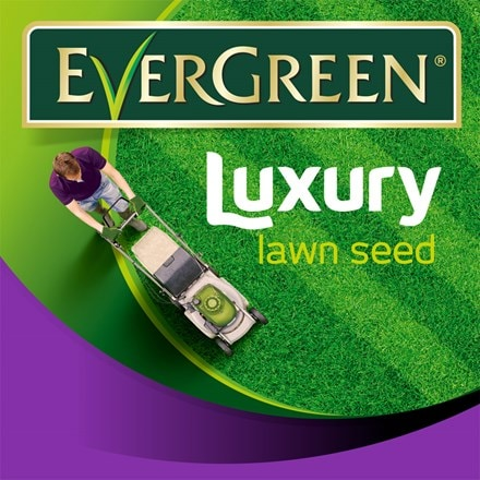 Evergreen luxury lawn grass seed