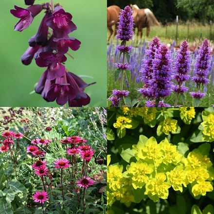 Vibrant colour for bees plant combination