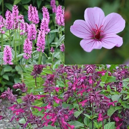 Long flowering plant combination