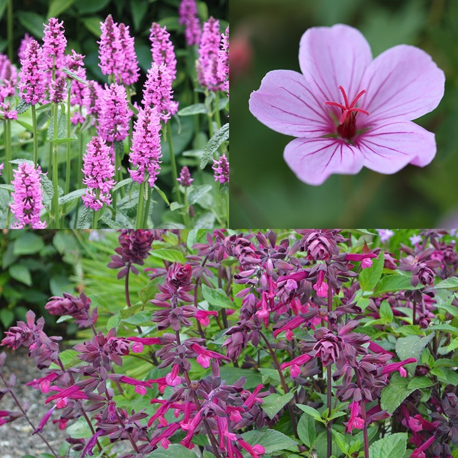 Buy Long Flowering Plant Combination Long Flowering Plant Combination
