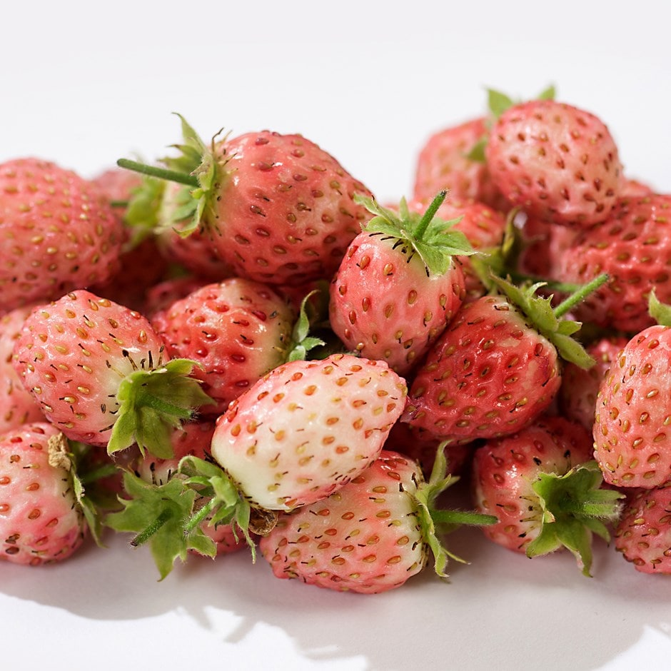 bubble berry / Fragaria 'Bubbleberry'