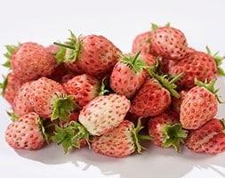 bubble berry / Fragaria 'Bubbleberry'