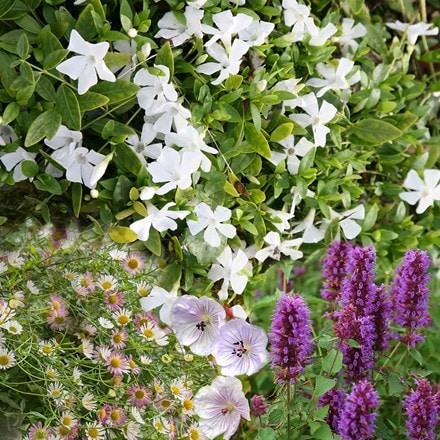 Long flowering plant combination (pink, purple and white)