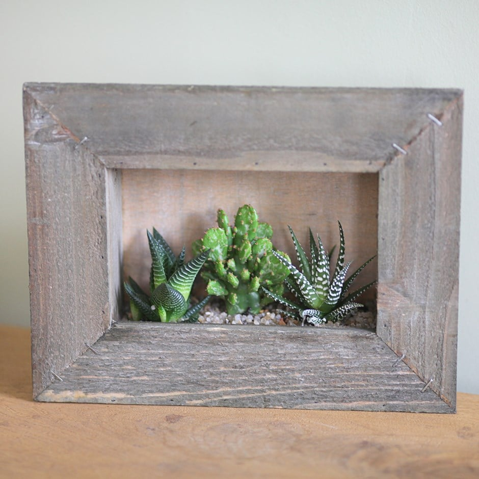Buy succulents in picture frame succulents in picture frame succulents in picture frame jeuxipadfo Image collections