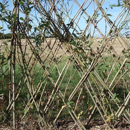 Willow kit for fence or arch