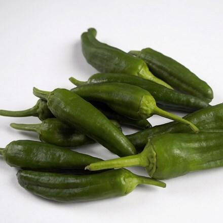 chilli Padron