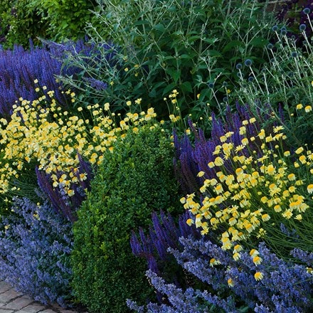 Blue and yellow border collection