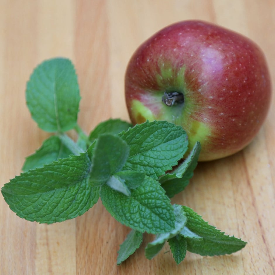 apple mint / Mentha suaveolens