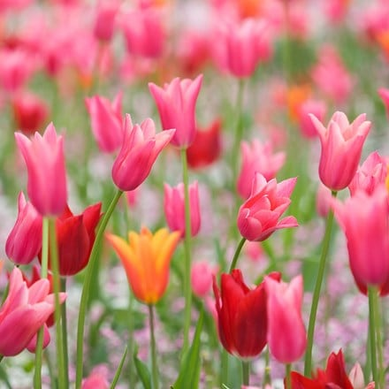 Fluted tulip collection