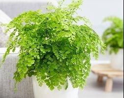 Next Garden Plants