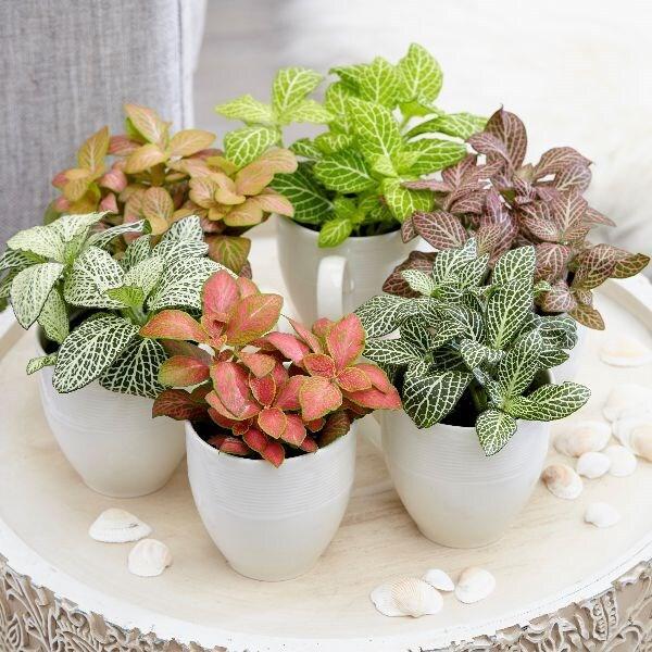 snakeskin starter plants