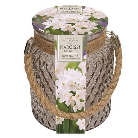 Narcissus papyraceus Ziva and glass gift jar
