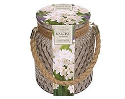 Indoor paperwhites & glass jar gift set