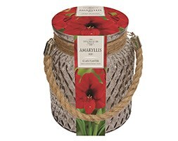 Indoor amaryllis & glass jar gift set