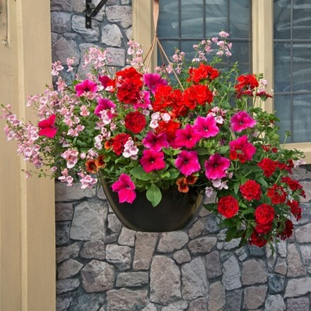 Pink to rose - Easyplanter for hanging baskets