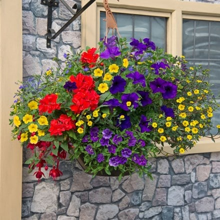 Primary colours - Easyplanter for hanging baskets