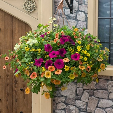 Bollywood - Easyplanter for hanging baskets