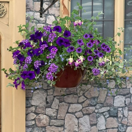 Blue to violet - Easyplanter for hanging baskets