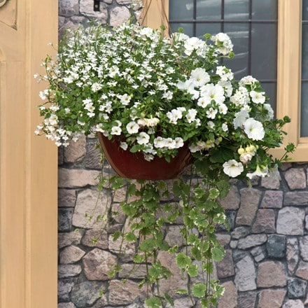 Silver & white - Easyplanter for hanging baskets