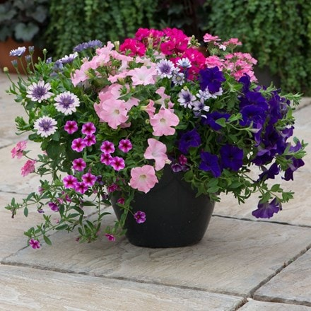 Sophistication - Easyplanter for hanging baskets & patio pots