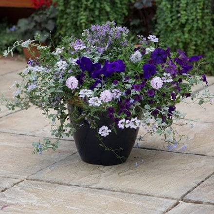 Blue to violet - Easyplanter for patio pots