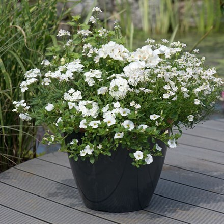 Silver & white - Easyplanter for patio pots