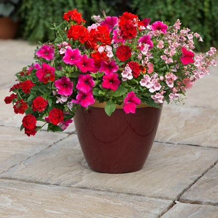 Pink to rose - Easyplanter for patio pots
