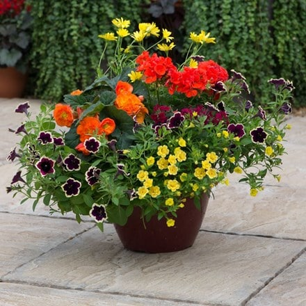 Bollywood  - Easyplanter for patio pots